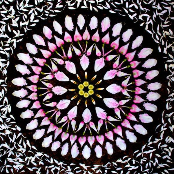 Mandalas feitas com flores e plantas por Kathy Klein (11)